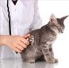 Ветеринарные клиники в Вожаеле